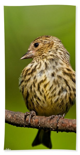 Pine Siskin With Yellow Coloration Hand Towel
