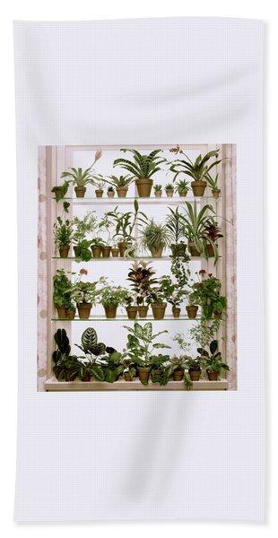Potted Plants On Shelves Bath Towel