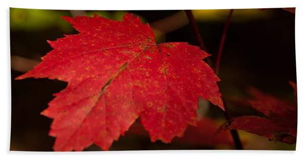Red Maple Leaf In Fall Hand Towel