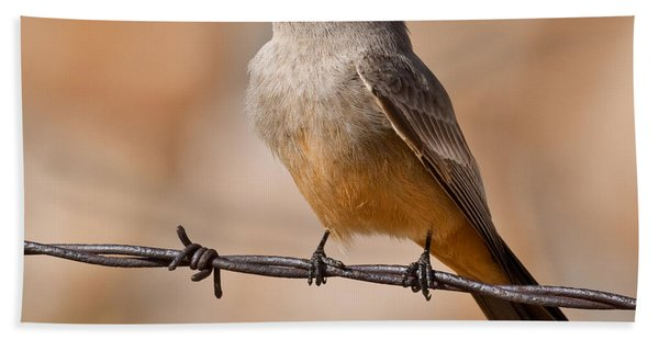 Say's Phoebe On A Barbed Wire Hand Towel