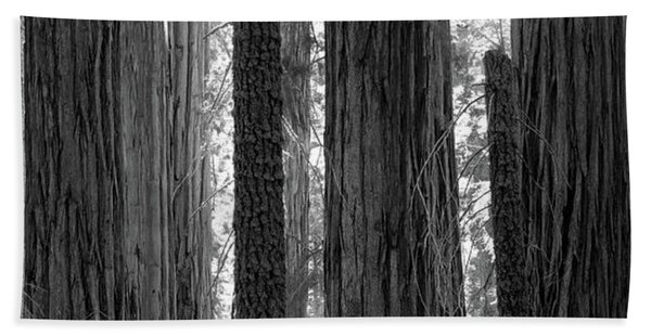 Sequoia Grove Sequoia National Park Bath Towel