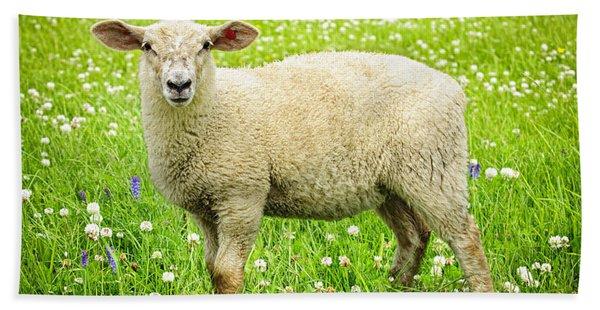 Sheep In Summer Meadow Bath Towel