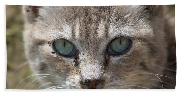 Silver Tabby But What Color Eyes Bath Towel