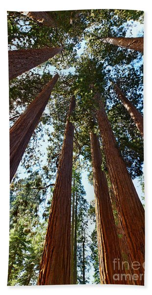 Skyscrapers - A Grove Of Giant Sequoia Trees In Sequoia National Park In California Bath Towel