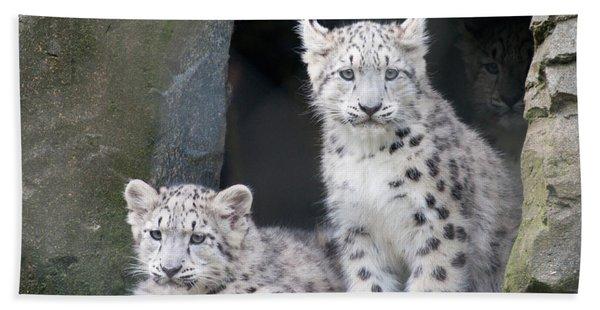 Snow Leopard Cubs Hand Towel