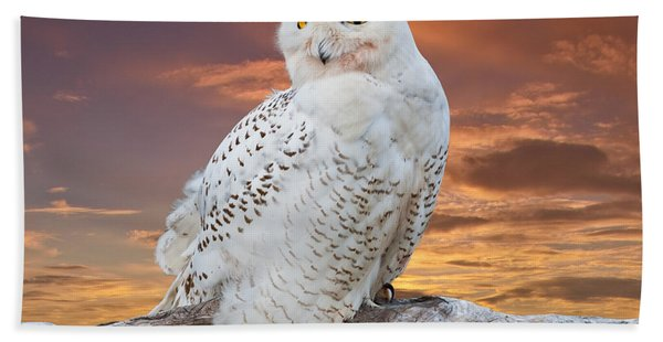 Snowy Owl Perched At Sunset Hand Towel