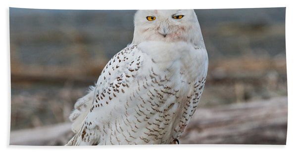 Snowy Owl Watching From A Driftwood Perch Hand Towel