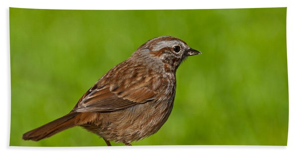 Song Sparrow On A Log Hand Towel
