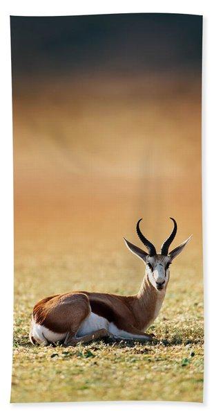 Springbok Resting On Green Desert Grass Bath Towel