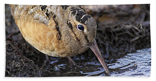 Streamside Woodcock Hand Towel