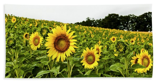 Sunflowers On A Hill Bath Towel