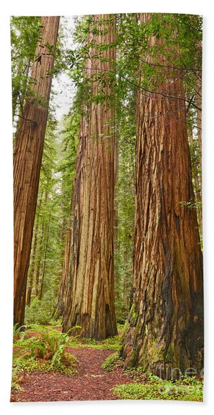 The Beautiful And Massive Giant Redwoods Sequoia Sempervirens In Redwood National Park. Bath Towel