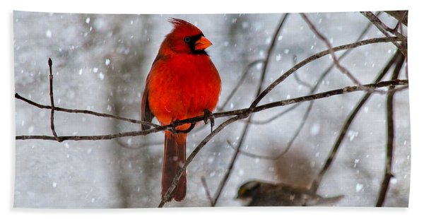 Blue Eyes In The Snow Cardinal  Hand Towel