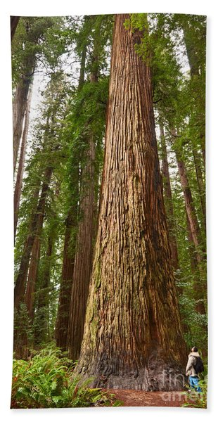 The Survivor - Massive Redwoods Sequoia Sempervirens In Redwoods National Park Named Stout Tree. Bath Towel