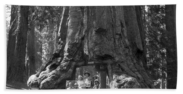 The Wawona Giant Sequoia Tree Bath Towel