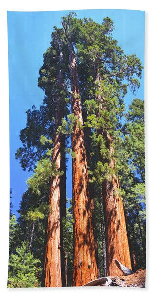Three Giant Sequoias  Bath Towel
