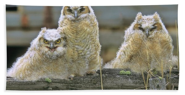 Three Great-horned Owl Chicks Bath Towel