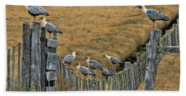 End Of The Road Birds Hand Towel