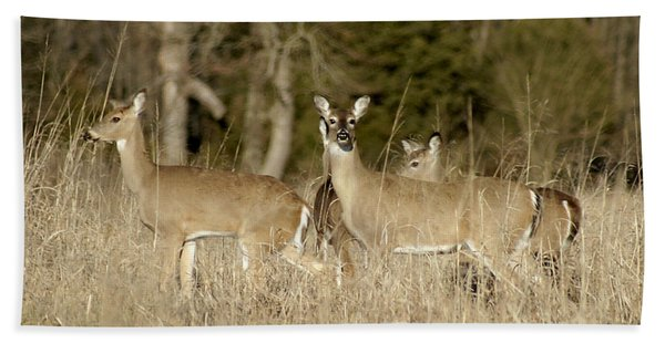 Vigilant White-tailed Deer Hand Towel