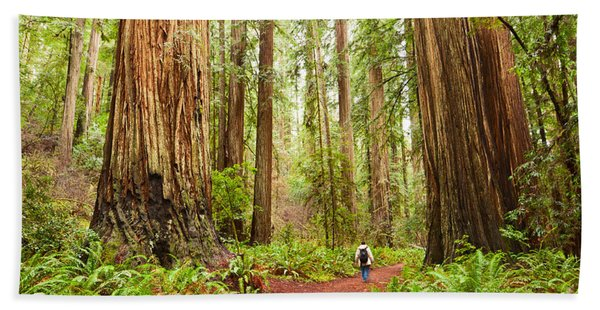 Walk Among Giants - Massive Redwoods Sequoia Sempervirens In Redwoods National Park. Bath Towel