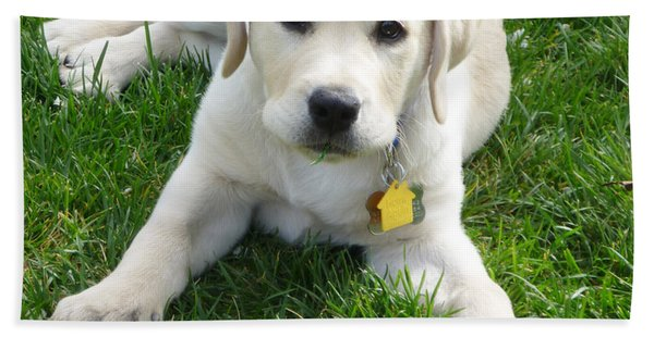 Yellow Lab Puppy Got A Ball Hand Towel