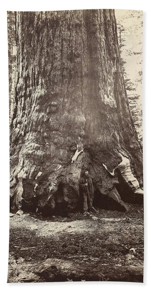 Yosemite Sequoia, C1865 Bath Towel