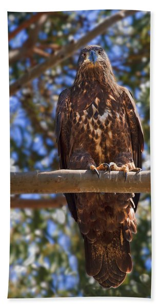 Immature Bald Eagle Bath Towel