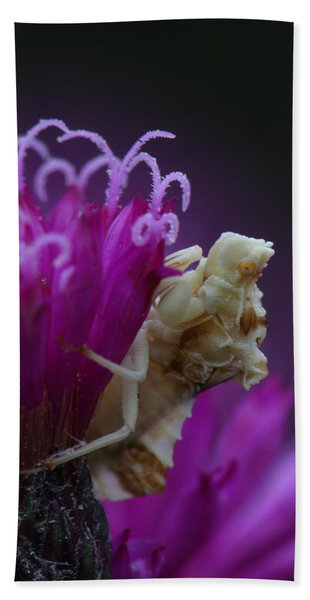 Ambush Bug On Tall Ironweed Hand Towel