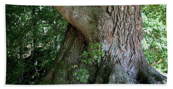 Bath Towel featuring the photograph Big Fat Tree Trunk by Lorraine Devon Wilke