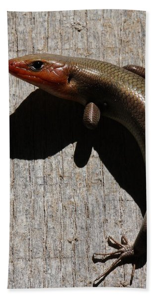 Broad-headed Skink On Barn  Hand Towel