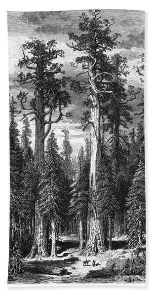 California: Big Trees Bath Towel