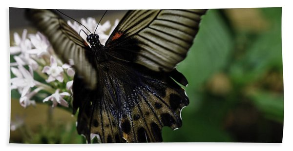 Great Mormon Butterfly Hand Towel