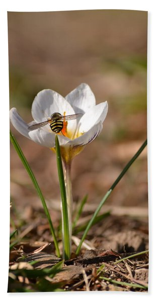 Hoverfly Visitng A Crocus Hand Towel