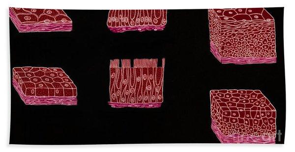Illustration Of Epithelium Types Bath Towel