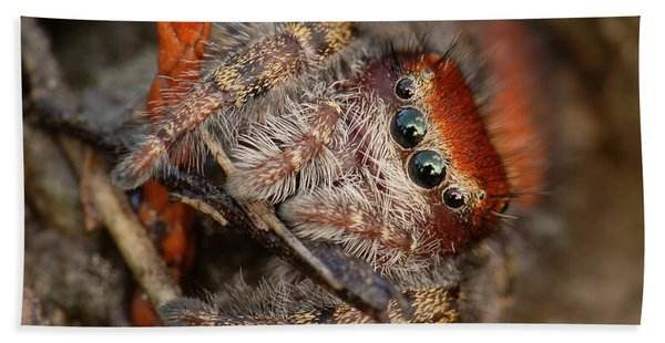 Jumping Spider Portrait Hand Towel