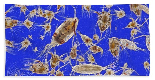 Live Marine Zooplankton Bath Towel