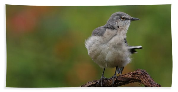 Mocking Bird Perched In The Wind Hand Towel