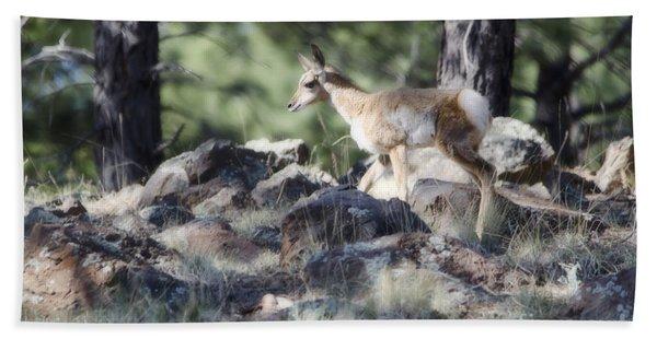 Pronghorn Antelope Fawn Hand Towel