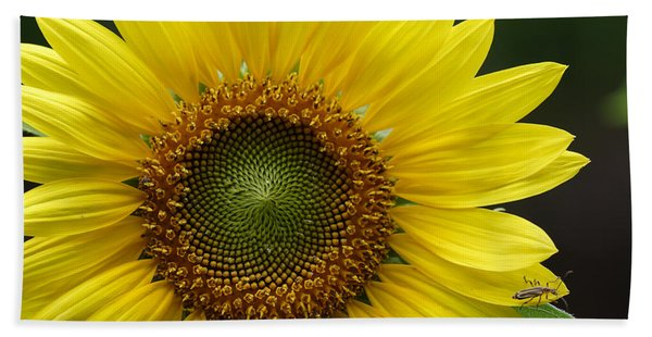 Sunflower With Insect Bath Towel
