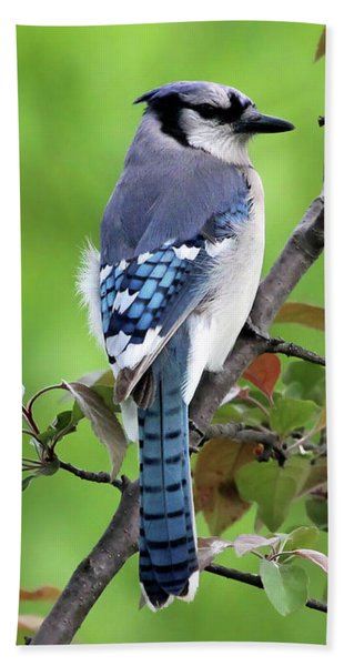 Blue Jay Hand Towel
