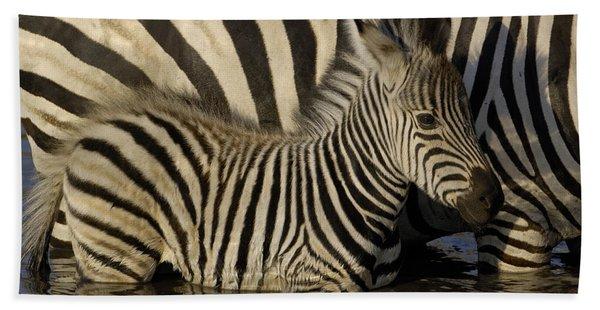Burchells Zebra Equus Burchellii Foal Bath Towel