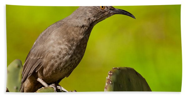 Curve-billed Thrasher On A Prickly Pear Cactus Hand Towel