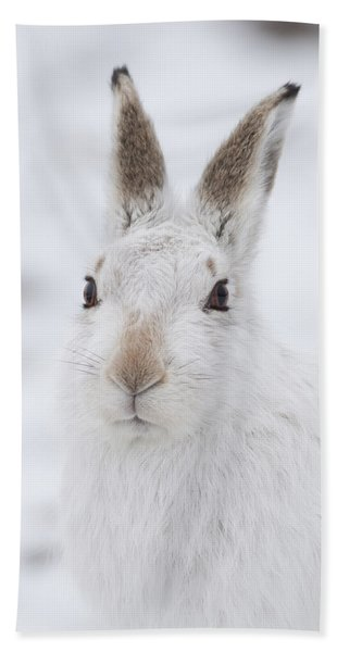 Mountain Hare In The Snow - Lepus Timidus  #1 Hand Towel