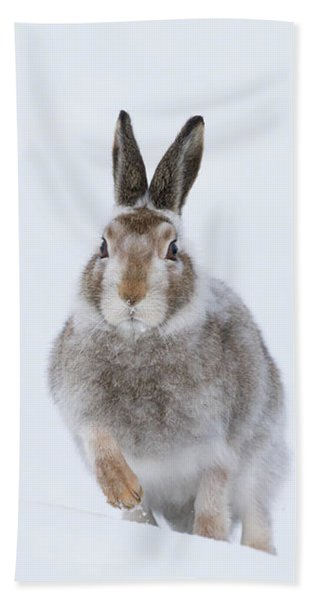 Mountain Hare - Scotland Hand Towel