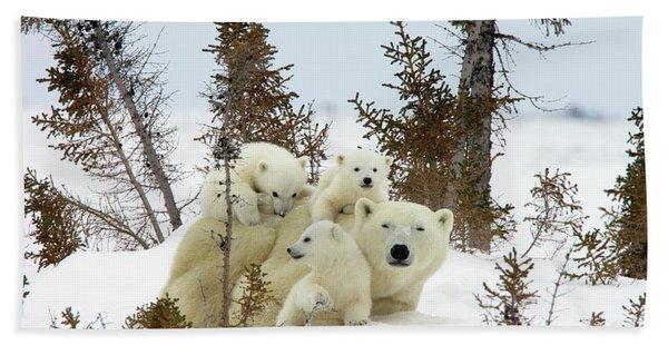 Polar Bear Ursus Maritimus Trio Bath Towel