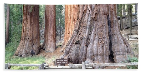 Yosemite Giant Sequoia Groves Bath Towel