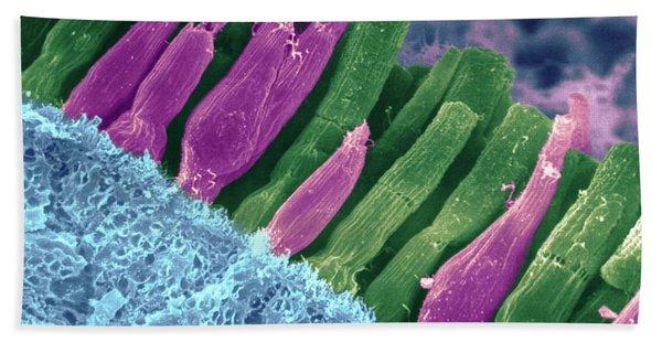 Rods And Cones In Retina Bath Towel