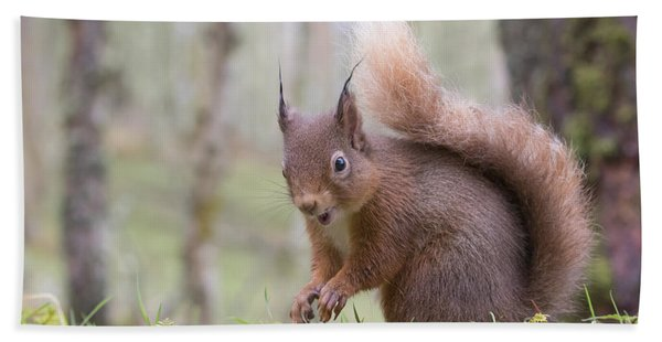 Red Squirrel - Scottish Highlands #8 Hand Towel