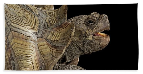 Bath Towel featuring the digital art African Spurred Tortoise by Larry Linton