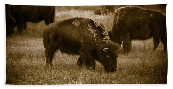 American Bison Grazing - Bw Bath Towel